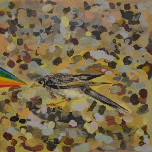 No Rainbow Without the Sun (Noisy Miner), 2012