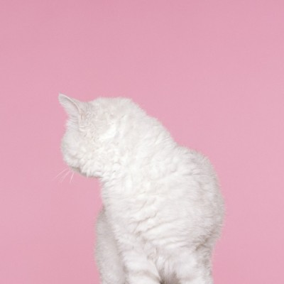 Petrina Hicks 2010 whiskers.jpg