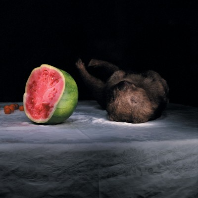 DREW--WOMBAT-WITH-WATERMELON-
