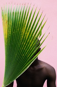 Untitled (Palm Frond), 2013
