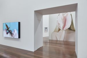 Installation view of Petrina Hicks: Bleached Gothic at The Ian Potter Centre: NGV Australia from 27 September 2019 – 29 March 2020